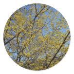 Cornelian Cherry Dogwood and Blue Sky Classic Round Sticker