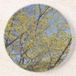 Cornelian Cherry Dogwood and Blue Sky Drink Coaster