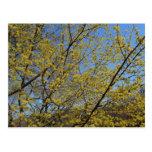 Cornelian Cherry Dogwood and Blue Sky Postcard