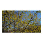 Cornelian Cherry Dogwood and Blue Sky Poster