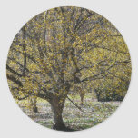 Cornelian Cherry Dogwood and Glory of the Snow Classic Round Sticker