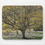 Cornelian Cherry Dogwood and Glory of the Snow Mouse Pad