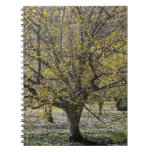 Cornelian Cherry Dogwood and Glory of the Snow Notebook