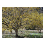 Cornelian Cherry Dogwood and Glory of the Snow Photo Print