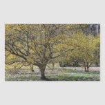 Cornelian Cherry Dogwood and Glory of the Snow Rectangular Sticker