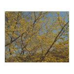 Cornelian Cherry Dogwood Blossoms and Blue Sky Wood Wall Art