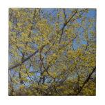 Cornelian Cherry Dogwood Tree Tile