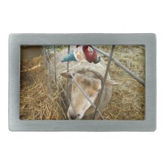 Cornelio y las ovejas hebilla cinturon rectangular