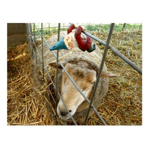 Cornelio y las ovejas postales