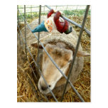 Cornelio y las ovejas tarjeta postal