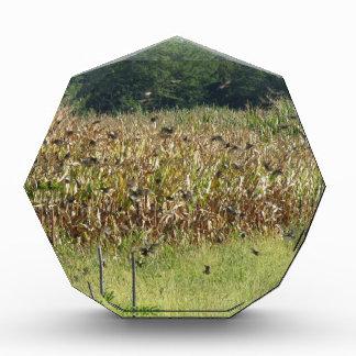 Cornfield and common starlings acrylic award