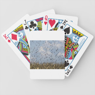 Cornfield and common starlings bicycle playing cards