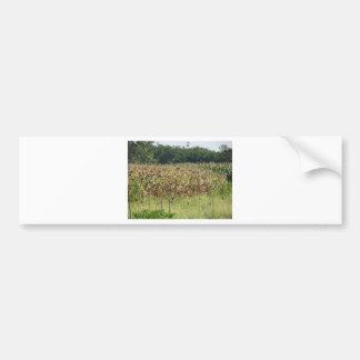 Cornfield and common starlings car bumper sticker