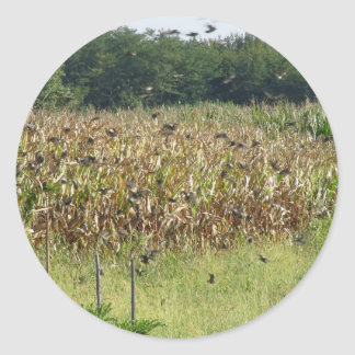 Cornfield and common starlings classic round sticker