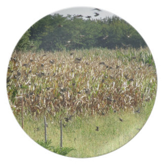 Cornfield and common starlings dinner plates