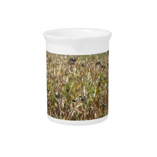 Cornfield and common starlings drink pitcher