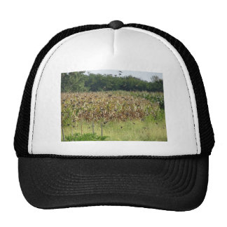 Cornfield and common starlings trucker hat