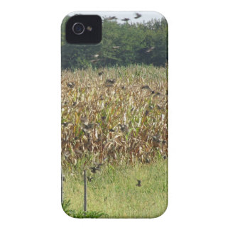 Cornfield and common starlings iPhone 4 Case-Mate case
