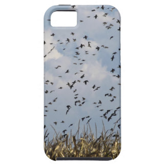 Cornfield and common starlings iPhone SE/5/5s case