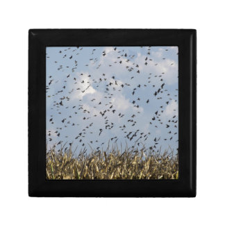Cornfield and common starlings jewelry box
