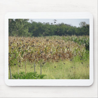 Cornfield and common starlings mouse pad