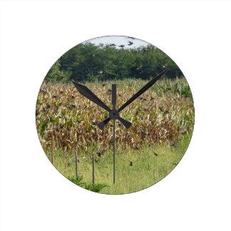 Cornfield and common starlings round clocks