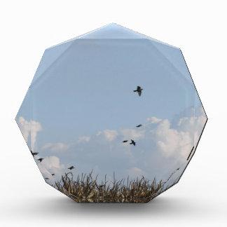 Cornfield and swallows acrylic award