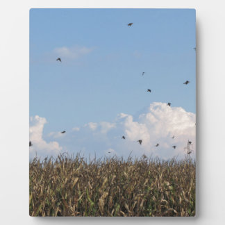 Cornfield and swallows display plaques