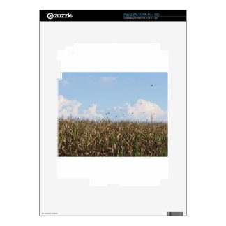 Cornfield and swallows skin for iPad 2