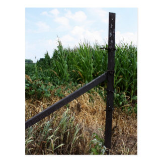 Cornfield Behind The Fence Postcard