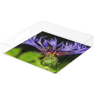 Cornflower 2 square serving trays