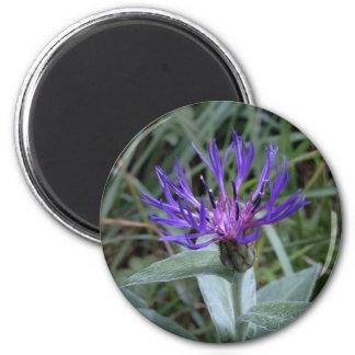 cornflower 2 inch round magnet