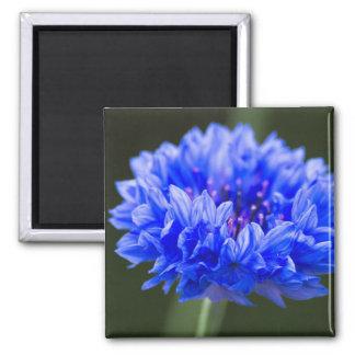 cornflower 2 inch square magnet