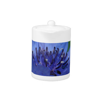 Cornflower azul