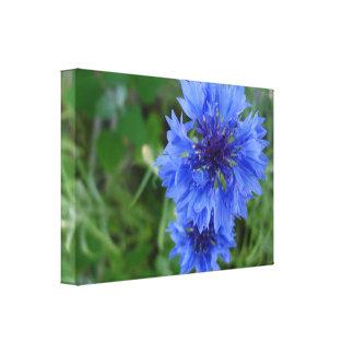 Cornflower azul impresión en lienzo estirada