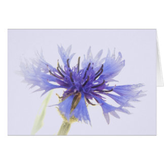 Cornflower Blue Card