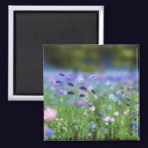 Cornflower Blue Magnet
