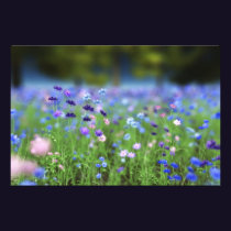 Cornflower Blue Photo Print