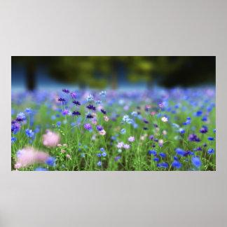 Cornflower Blue Print