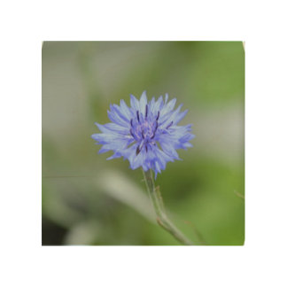 Cornflower bonito impresiones en madera