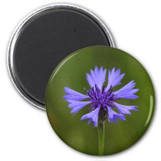 Cornflower (Centaurea cyanus) 2 Inch Round Magnet