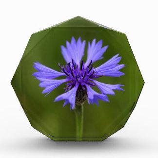 Cornflower (Centaurea cyanus) Acrylic Award