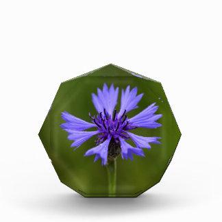 Cornflower (Centaurea cyanus) Award