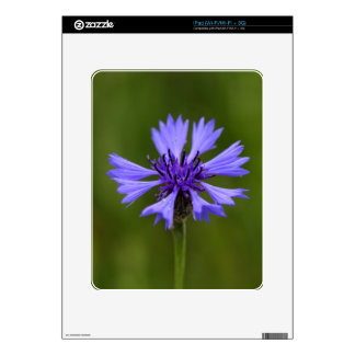 Cornflower (Centaurea cyanus) iPad Decal