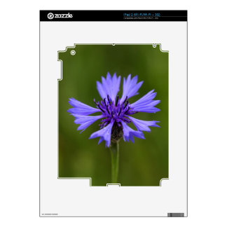 Cornflower (Centaurea cyanus) Skins For iPad 2