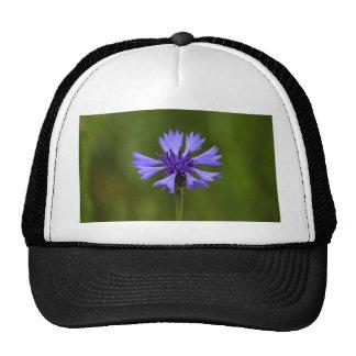 Cornflower (Centaurea cyanus) Trucker Hat