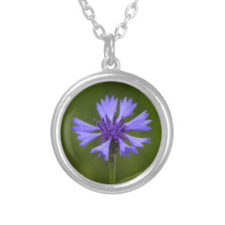 Cornflower (cyanus del Centaurea) Collar Plateado