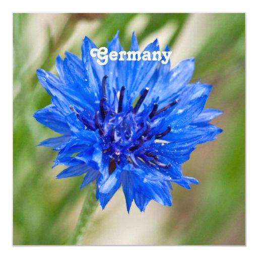 """Cornflower de Alemania Invitación 5.25"""" X 5.25"""""""