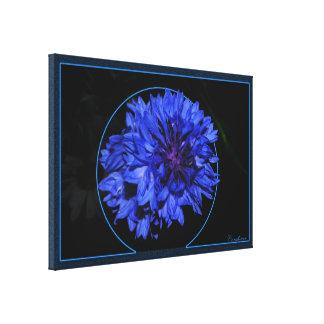 Cornflower Lienzo Envuelto Para Galerías