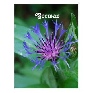 Cornflower Post Cards